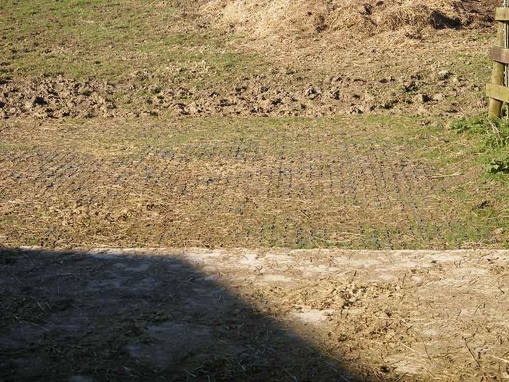 You can see how the paddock remains firm and level where the Ecogrid has been installed